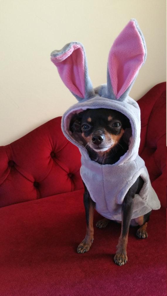 Secret Life Of Pets Halloween Costumes