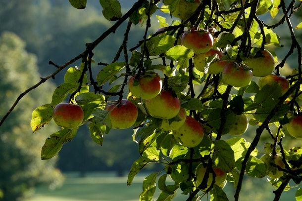 Apple is a great cat name, after the popular autumn fruit