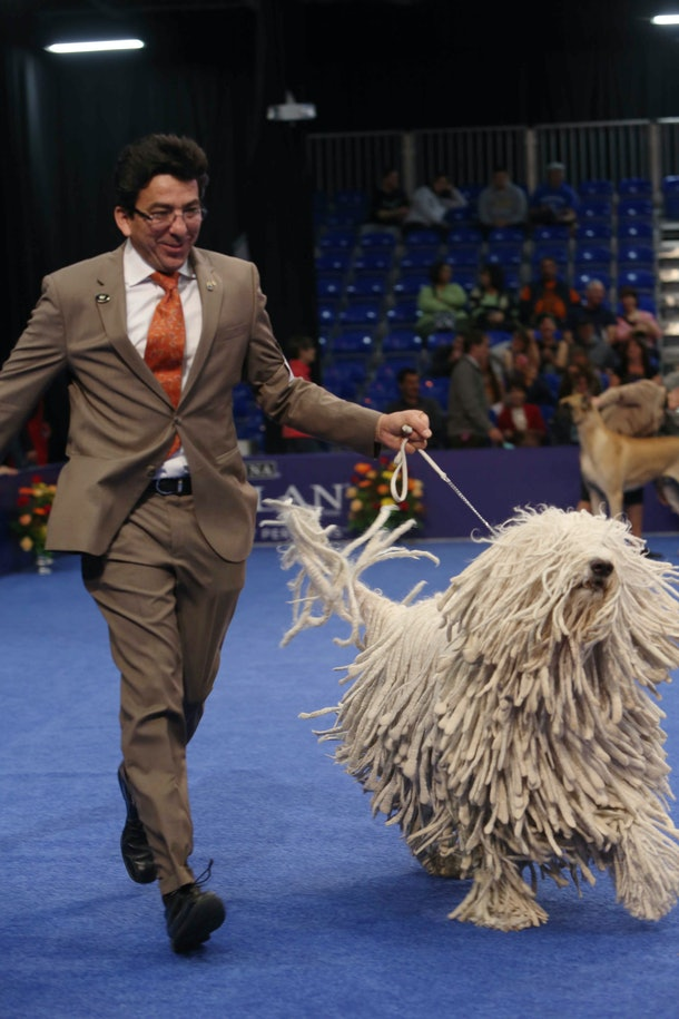 Photos from previous years' National Dog Shows can help kids learn about the many different kinds of dog breeds out there.