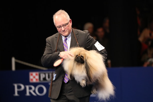 From bald to well, hairy, photos from the National Dog Show have it all.