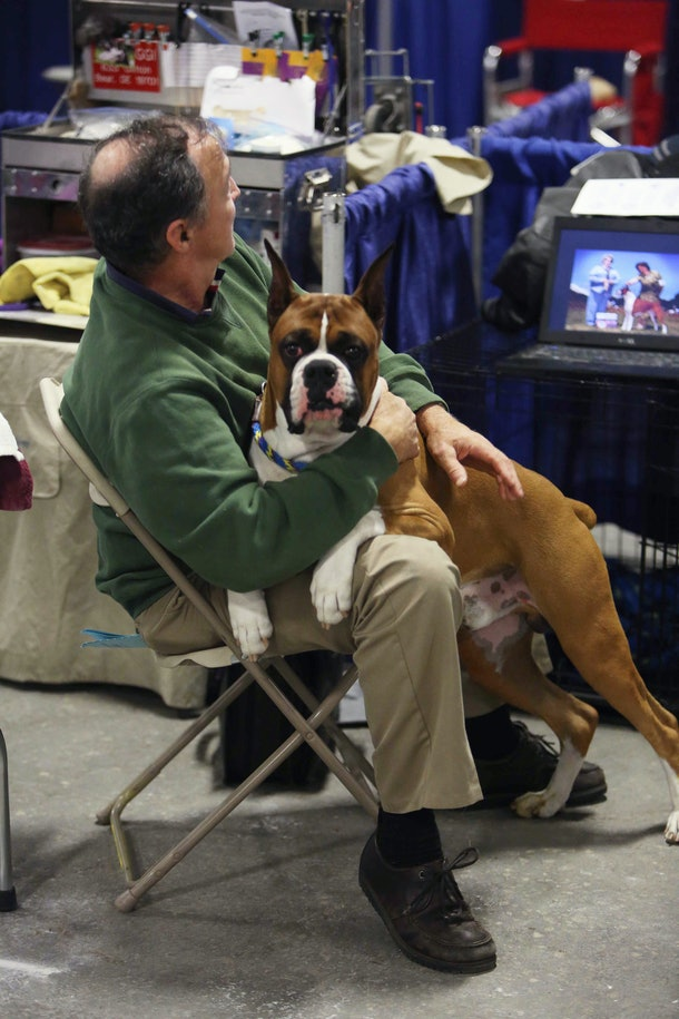 Of course, it's photos of what goes on backstage at the National Dog Show that capture all the cuddles.