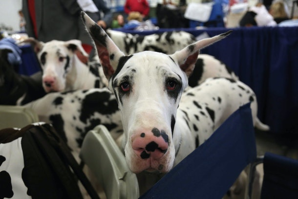 Photos from previous years' National Dog Shows are full of adorable pups.
