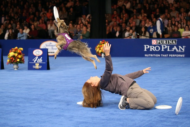 There's more to life than looks as competitors in previous years' National Dog Shows have shown.