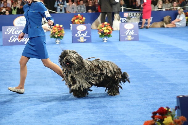 With differences in size, color, and style, photos from previous years' National Dog Shows can also help kids learn about inclusivity.