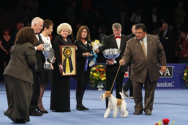 Photos of previous years' National Dog Show champs prove this annual event always picks a cutie.