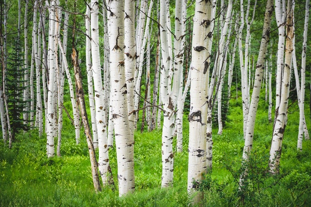 Birch can be a sweet winter-inspired baby name, and is unisex.
