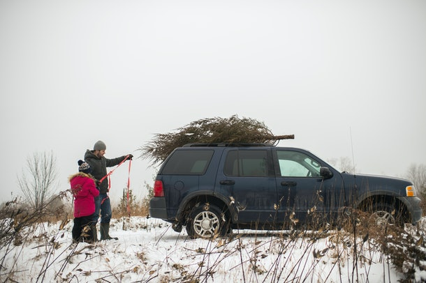 Your Christmas tree may leave a trail of sap on your car's exterior, but there's a way to remove it.