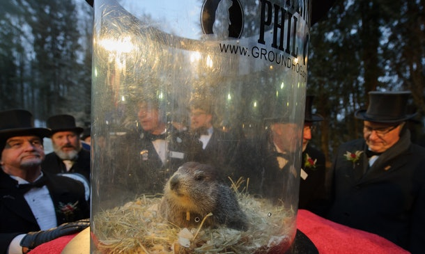 PETA apparently wants Groundhog Day to be run by robot groundhogs.