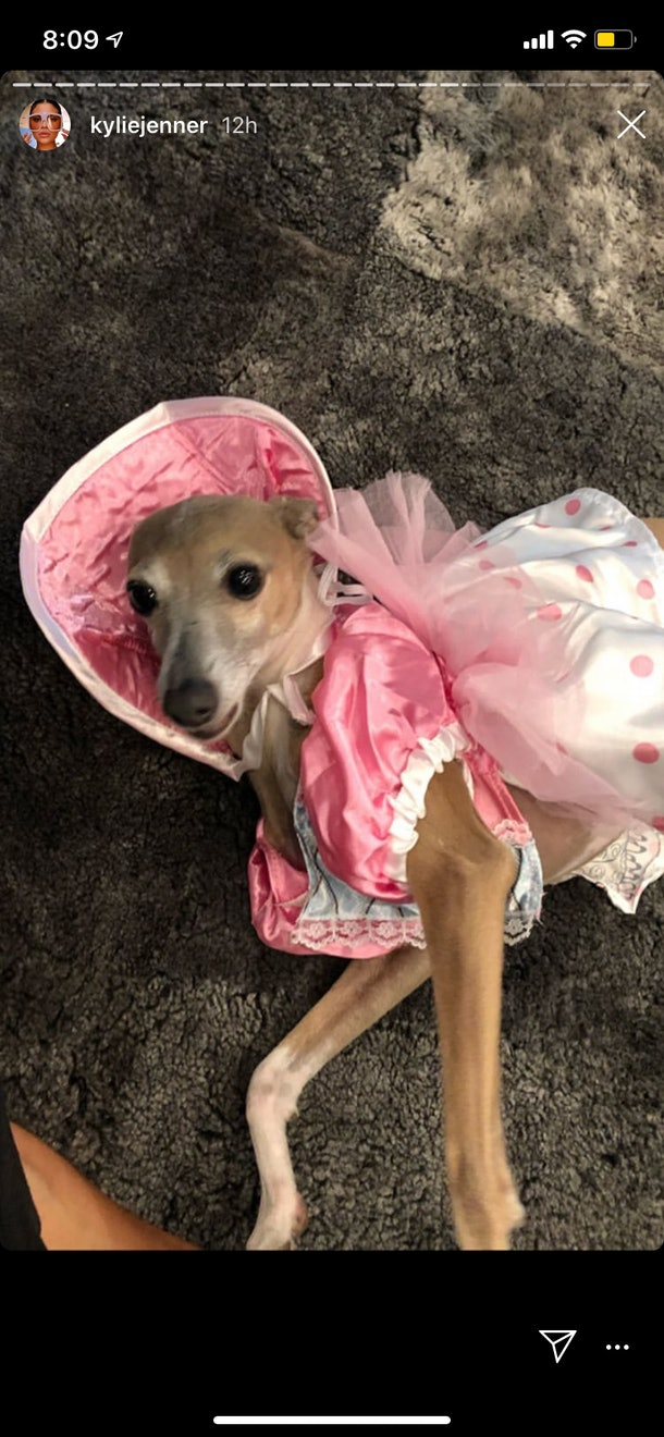 Kylie Jenner's dog dressed up as Bo Peep from 'Toy Story'