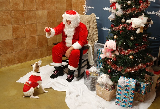 Pets can take photos with Santa Claus.