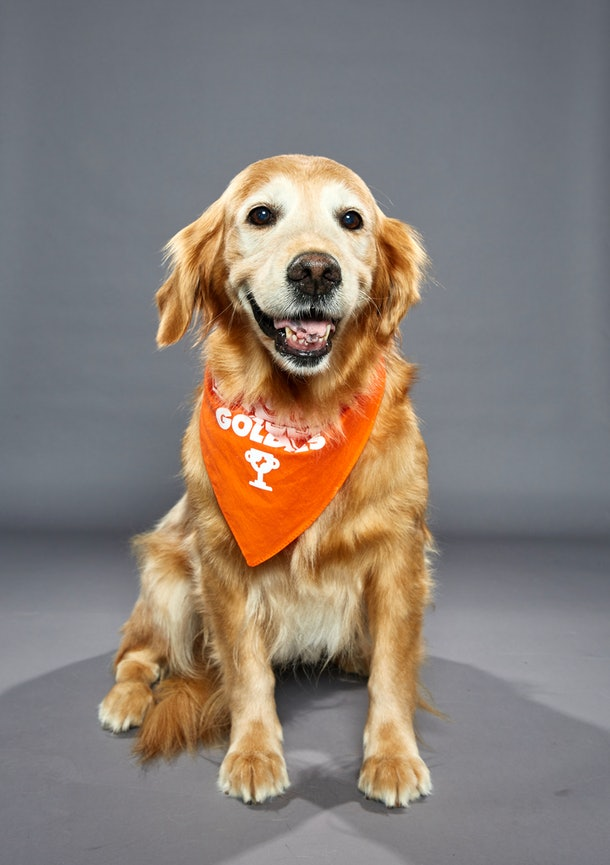 Dogs will compete on Team Oldies and Team Goldies
