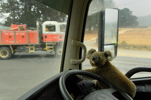 "A koala named ""Tinny Arse"" that was rescued by Damian Campbell-Davys from a bushfire zone sits in his water tanker."
