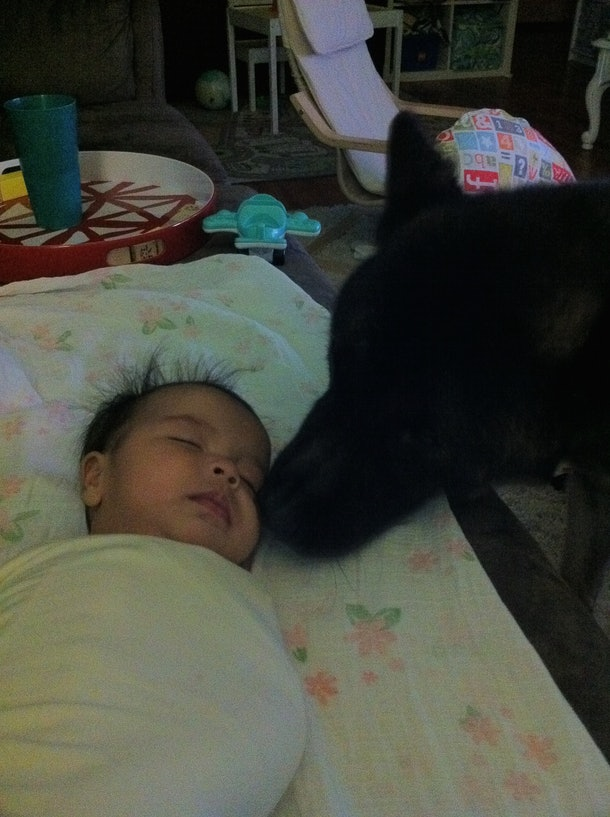 A gorgeous three month old baby being smelled by a very old akita.