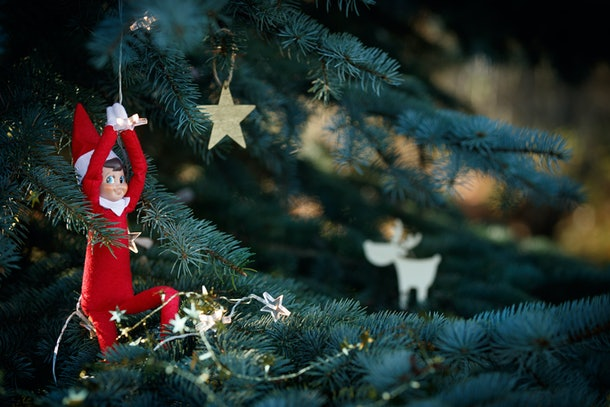 Elf toy hanging on a garland on the branches of a blue Christmas tree on a background of toys hanging on the branches of a spruce. New Year and holiday concept