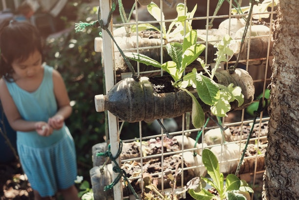 growing lettuce in used plastic bottles, reuse recycle eco concept, montessori homeschool education