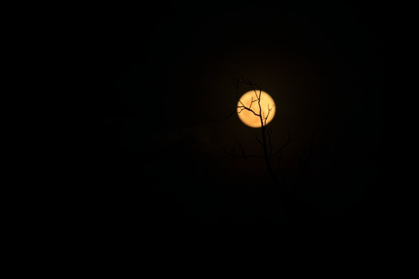 The silhouette of the tree and the full moon,Full moon, black background