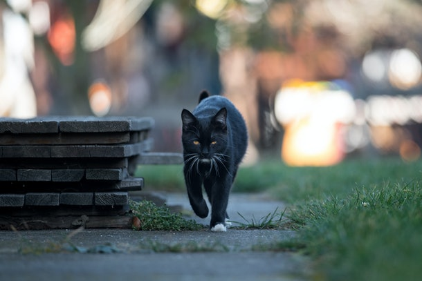 Young black cat goes to the street.