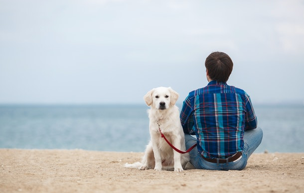 Man sitting with dog on sand dune. man with his dog at the summer beach sitting back to camera