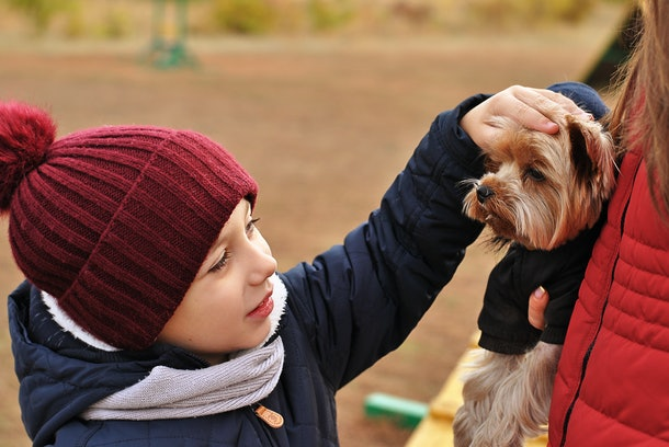 Kid petting a dog, child looking at the little cute Yorkshire terrier and touches it. Love pets and animals concept. Friendship of kids with dogs. Happy childhood. Walking outdoors at the park autumn