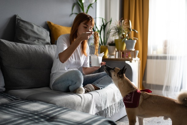 Cute dog smelling takeaway box of Chinese noodles while standing near sofa with eating woman at home