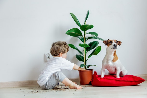 Little baby boy with plant and dog sitting on a floor at home